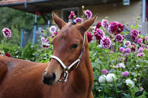 Hohgant-Ranch Enya