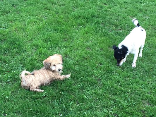 Fleur und Bonnie beim Spielen.