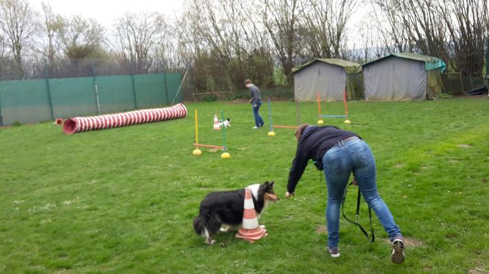 Der Hund wurde um eine Pylone rumgeschickt...