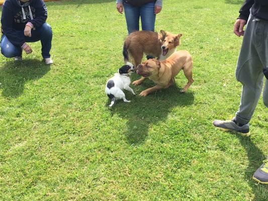 Kaz, Bruno und Bonnie haben ihren Spaß.