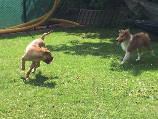Bruno und Kaz spielen...