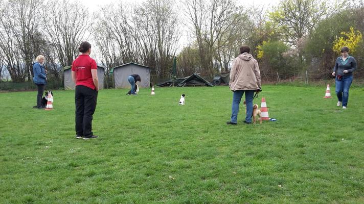 ... danach wurde der Hund in der Mitte abgesetzt und musste warten bis er gerufen oder abgeholt wurde.