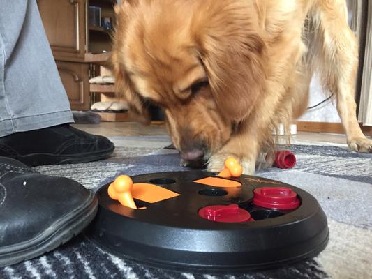 Fynn hat nach ein paar Versuchen raus gehabt, wie sein Spielzeug funktioniert.
