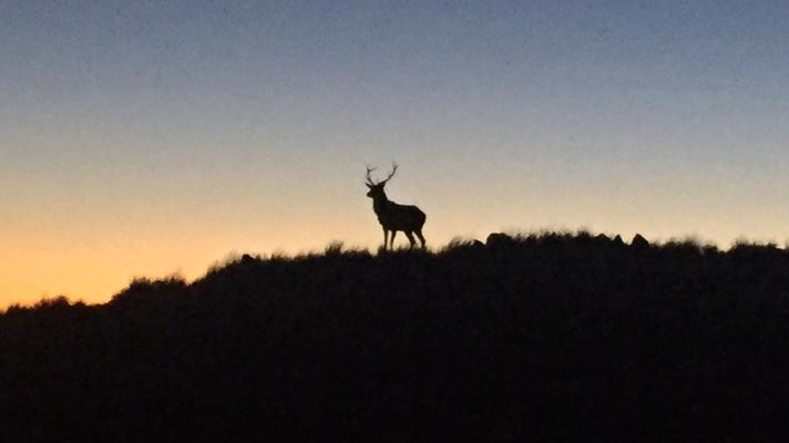 Jagdsaison Tararua Crossing