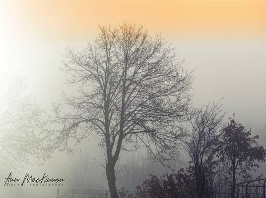 Scheidegg im Nebel
