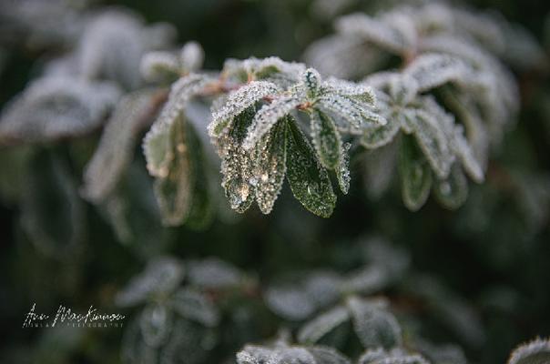 Frostiges Scheidegg