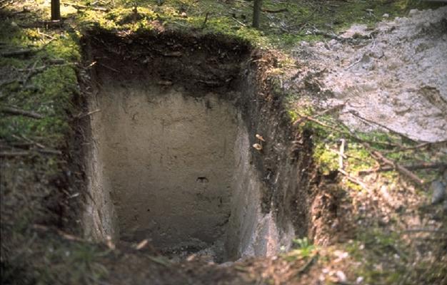 Bodenschichten werden analysiert. Foto: Johann Schilling