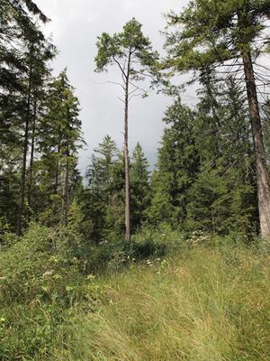 Gelichtete Waldfläche. Foto: Johann Schilling