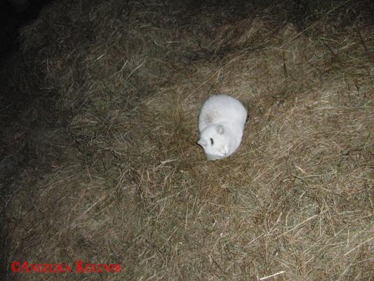 Bis auf dieses niedliche kleine Wesen mit Namen 'Henkel'. #Ghosthunters #paranormal #Spuk