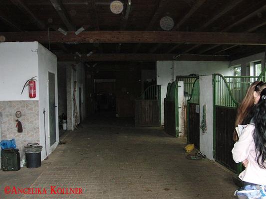 Eindrücke vom Stall, in dem der Freund der Klientin ein Erlebnis hatte. Die Orbs sind gewöhnliche Stauborbs. #paranormal #ghosthunters