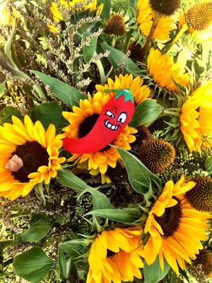 Ama Cilurzo Sängerin Hochzeitssängerin Blumen Kartause Ittingen St.Gallen Wil Schweiz Sonnenblumen Chili