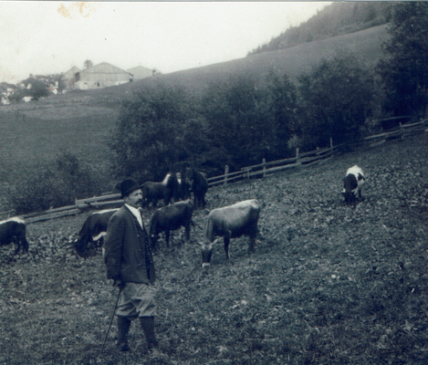 Johann Royer bei den Kühen