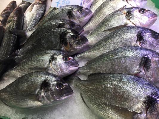 Toter Fisch; ich hab noch viel mehr Fotos gemacht, zeig ich besser hier nicht