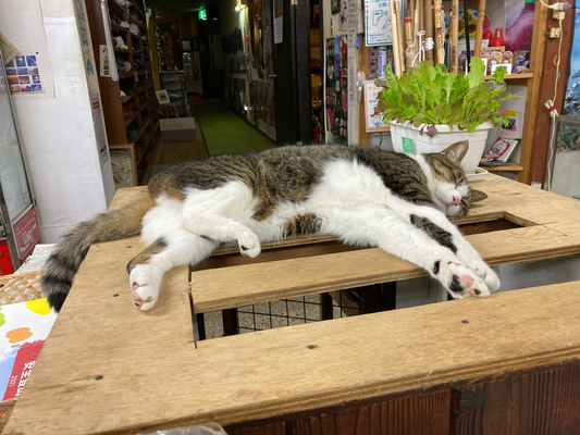世界に発信されている有名な捨て猫です