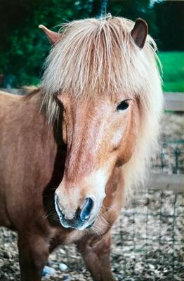 Helgi, Lilo's erstes Pony
