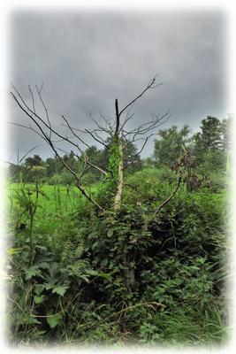 Der tote Baum und die Sträucher