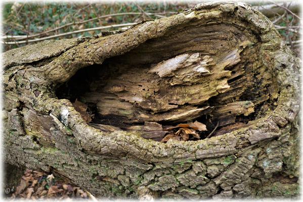 Der Holzauffänger