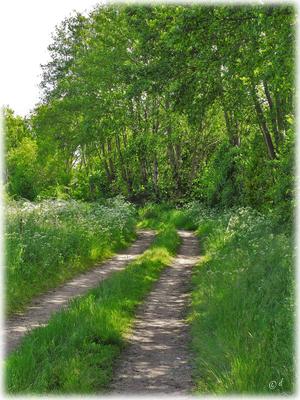 Der Feldweg zu den Wiesen