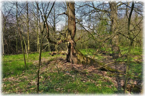 Der alte Baum durfte hier bleiben