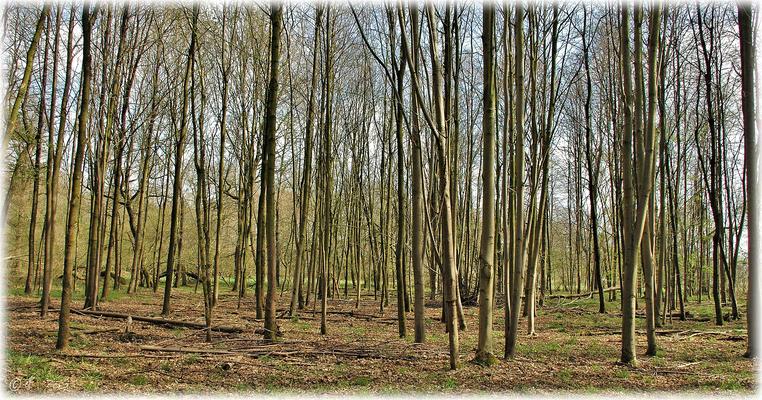 """Der """"Mikado""""-Wald"""