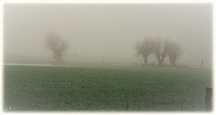 Feuchtwiesen im Nebelschleier