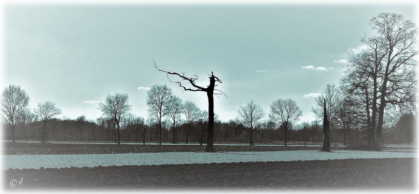 Der tote Baum ...