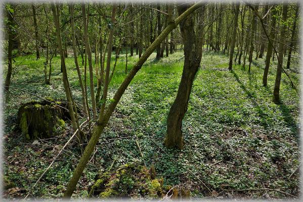 ... die das eher eintönige Bild des Waldes auflockern