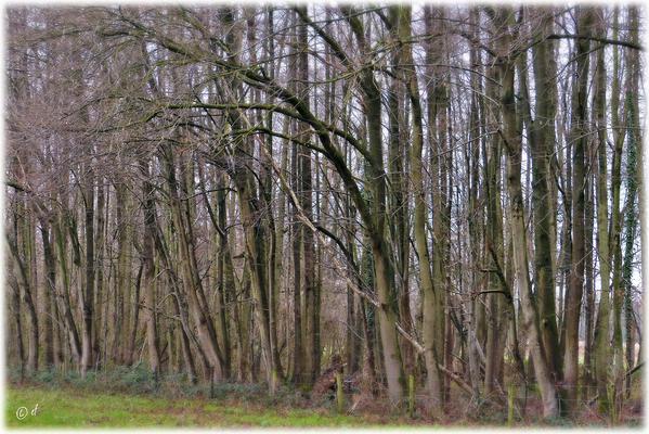 Vor lauter Bäumen ...