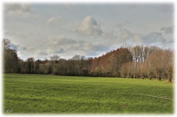 Wiesen- & Waldflächen gehen ineinander über