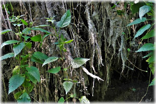 Wie eine Tropfsteinhöhle - Die ans Tageslicht hervorgekommene Baumwurzel