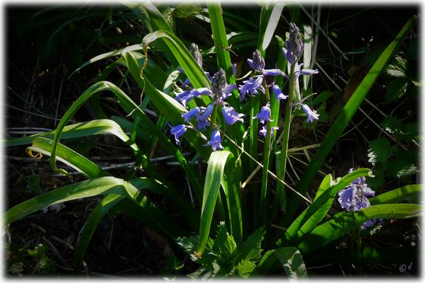 Ein lila-blauer Farbtupfer am Wegesrand