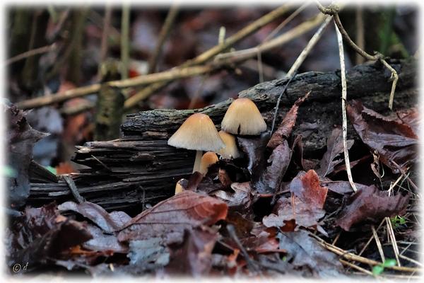 Pilze lieben Feuchtigkeit
