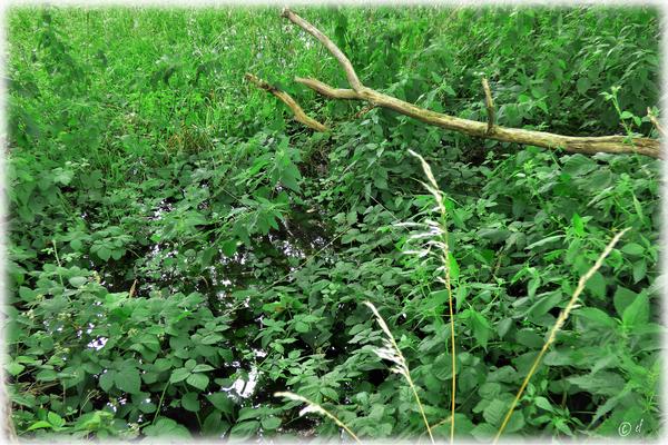 Die angrenzenden Felder gleichen einem nassen prallgefüllten Schwamm