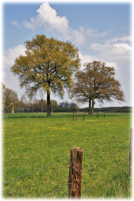 Bäume, Feld & Himmel
