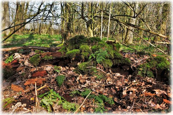Das grüne Grab ... wenn ein Baum geht