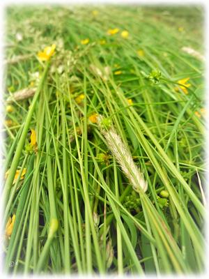 Wenn das Gras abgemäht ist