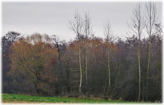 ... einer Landschaft