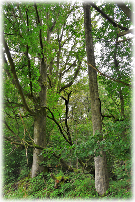 Typische Waldabschnitte dieser Region