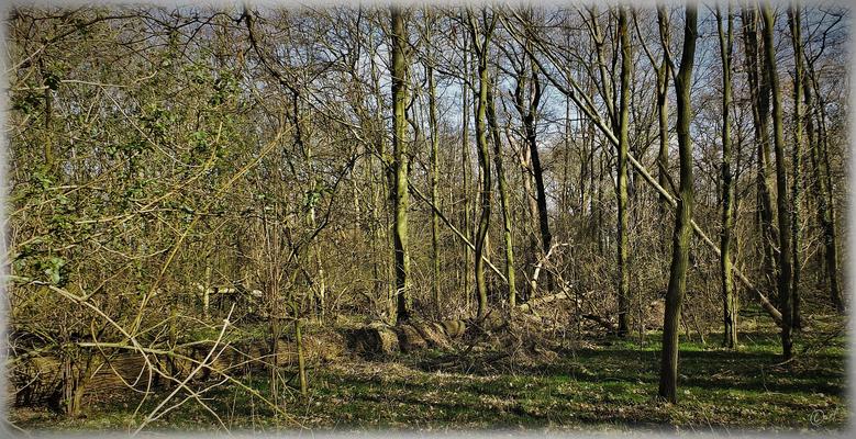 Ein weiteres angrenzendes naturbelassenes kleines Waldstück