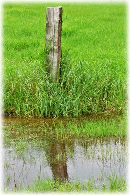 Der Pfosten am Wasserrand