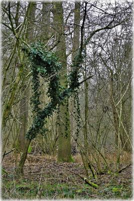 Der Immergrün-Schmuck