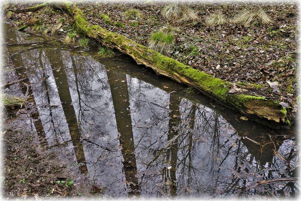Der liegende Stamm & die Spiegelung