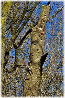 Der Spechtbaum