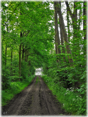 Der Weg aus dem NSG