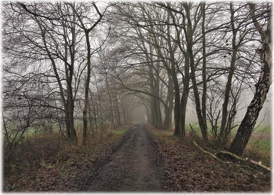 Der neblige Waldweg