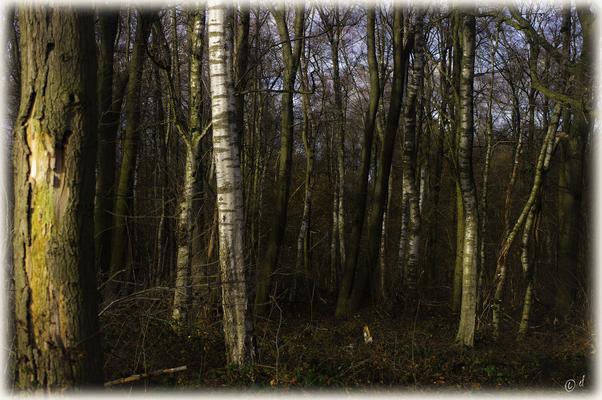 Mitten im Naturwald
