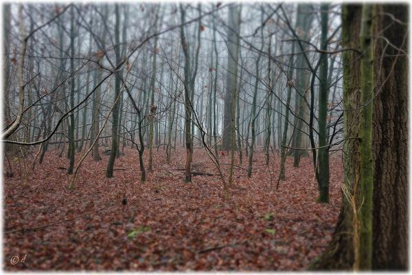 Der Mikado-Wald mal so, ...
