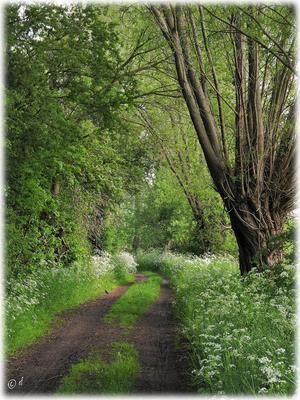 Ein Weg für ruhige ...