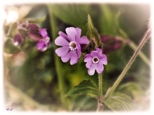 ... Blüten
