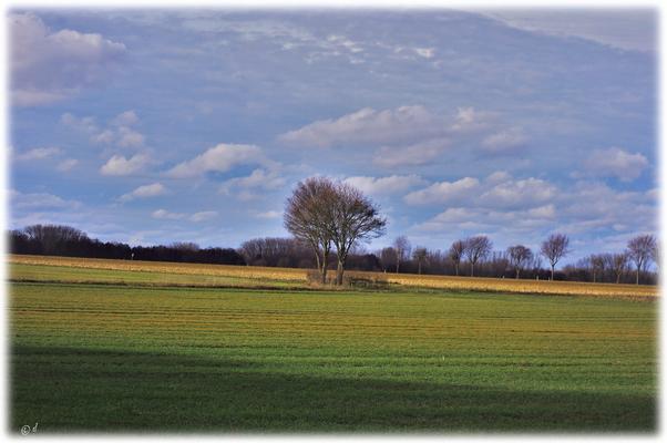 Am Waldgebiet grenzen direkt Felder an.... (Richtung Isenbruch/Selfkant)